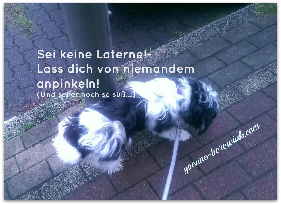 Foto_Hund_5 Tipps wenn dein Ex dir ans Bein pinkelt03012016_bearbeitet2