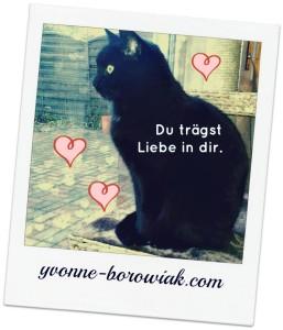Katze_Liebe_17012016_bearbeitet_Schriftzug