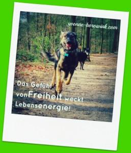 Hunde_Tanja_Energiesäule_07022016_bearbeitet
